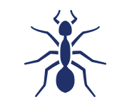 blue ant on a white background that we use as an icon for our ant control at A-Action Pest Control