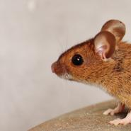 mouse in my house with gray background