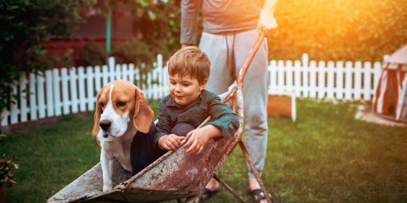 Parent pushed their son and beagle in a red faded wheel barrow through their fenced in backyard. They are enjoying the absence of mosquitoes, fleas, and ticks thanks to the exterminators at A-Action Pest Control